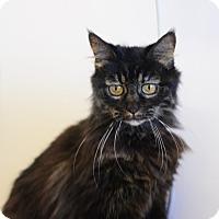 Adopt A Pet :: Hoot - Gardnerville, NV