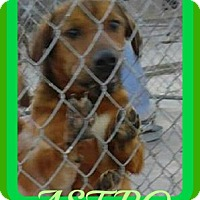 Adopt A Pet :: ASTRO - Middletown, CT