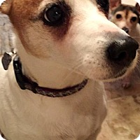 Adopt A Pet :: PATTY - Elyria, OH