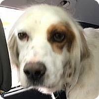Adopt A Pet :: RIVER - Pine Grove, PA