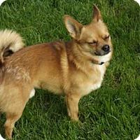 Adopt A Pet :: Nacho - Cincinnati, OH
