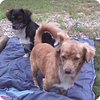 Adopt A Pet :: Geo DG in AR - Providence, RI