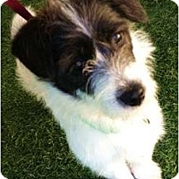 Adopt A Pet :: Clarabelle - Mission Viejo, CA