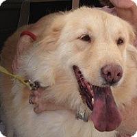Adopt A Pet :: Jinger - New Canaan, CT