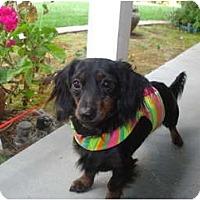 Adopt A Pet :: Duncan - San Jose, CA
