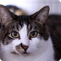 Adopt A Pet :: White Paws - Chicago, IL