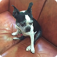 Adopt A Pet :: JASMINE - North Augusta, SC
