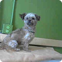Adopt A Pet :: laura - Simi Valley, CA