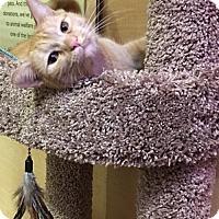 Adopt A Pet :: Izzy-C - San Jose, CA