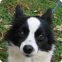 Adopt A Pet :: Lilla - Erwin, TN