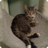 Adopt A Pet :: Harley Quinn - Warren, MI