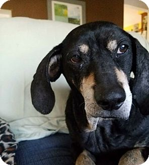 Coonhound Mix Dog for adoption in Fort Atkinson, Wisconsin - Daisy Mae