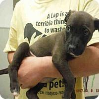 Adopt A Pet :: A572891 - Oroville, CA