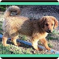 Adopt A Pet :: Willie - Murrieta, CA