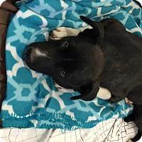 Adopt A Pet :: Quinn - Tucson, AZ