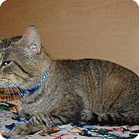 Adopt A Pet :: Tommie - Whittier, CA