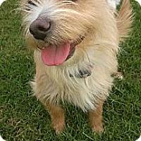 Adopt A Pet :: Mia - Baton Rouge, LA