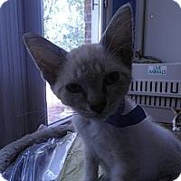Adopt A Pet :: Alexander - Warren, MI
