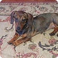 Adopt A Pet :: Abbey - Orlando, FL