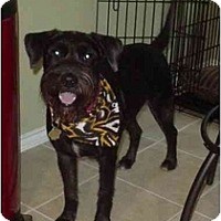 Adopt A Pet :: Sherman - Kingwood, TX