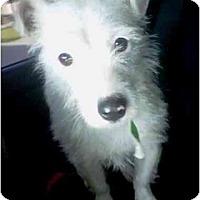 Adopt A Pet :: Wiggles - Gilbert, AZ
