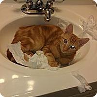 Adopt A Pet :: Sebastian - Morgan Hill, CA