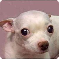 Adopt A Pet :: Hector - New York, NY