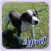 Adopt A Pet :: April - Williston, FL