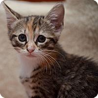 Adopt A Pet :: Emmy - Reston, VA