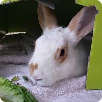 Adopt A Pet :: Marquis - Williston, FL