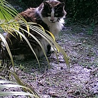 Adopt A Pet :: Sqeaker - Naples, FL