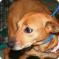 Adopt A Pet :: Etsy - Erwin, TN