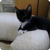 Adopt A Pet :: Jean - Lancaster, CA