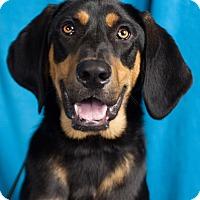 Adopt A Pet :: Robbie - Minneapolis, MN