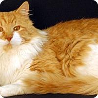 Adopt A Pet :: Dublin - Newland, NC