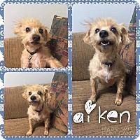 Adopt A Pet :: Aiken - Garden City, MI