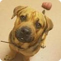 Adopt A Pet :: Moose 6825 - Columbus, GA
