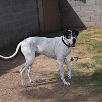 Adopt A Pet :: Sassy Sasha - Phoenix, AZ