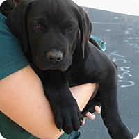 Adopt A Pet :: 3Apups - Palmdale, CA