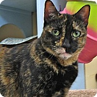 Adopt A Pet :: Teeka - Deerfield Beach, FL