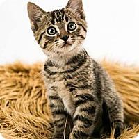 Adopt A Pet :: Bacardi - Eagan, MN