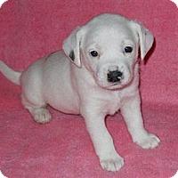 Adopt A Pet :: Grace - Wilmette, IL