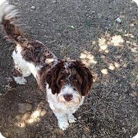 Adopt A Pet :: Chelsea - Surrey, BC