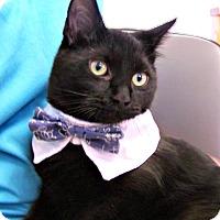 Adopt A Pet :: Herman Munster - Toledo, OH