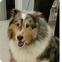 Adopt A Pet :: Grayson - COLUMBUS, OH
