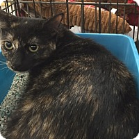 Adopt A Pet :: Faith - La Canada Flintridge, CA