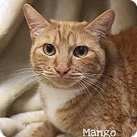 Adopt A Pet :: Mango - Foothill Ranch, CA