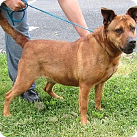 Adopt A Pet :: Connie - Reeds Spring, MO