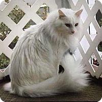 Adopt A Pet :: Devlin - Merrifield, VA