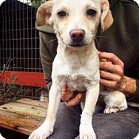 Adopt A Pet :: Heidi - Eugene, OR